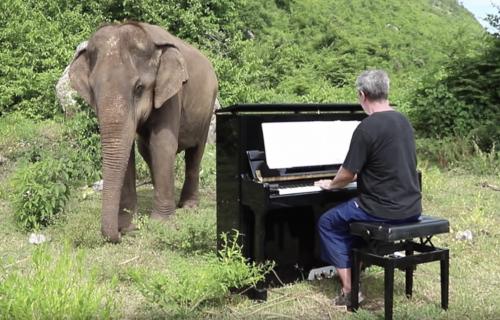 Neverovatno: Slepa slonica pleše uz Šopena (VIDEO)