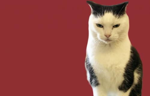 """Udruženje za zaštitu životinja traži dom za """"najgoru mačku na svetu"""""""