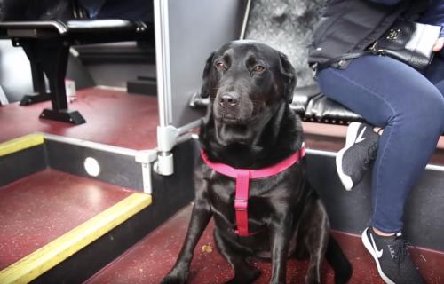 Ova kuca se sama vozi autobusom i ima nešto što nikad niste videli (FOTO+VIDEO)