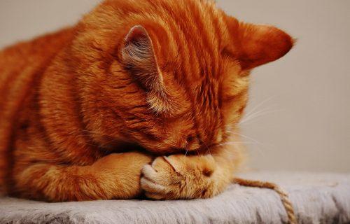Presmešno: Da li ste se ikada zapitali kako mačke hrču?