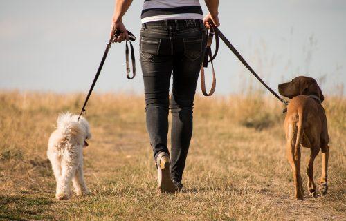 Pas je idealan kućni ljubimac! Dajemo vam 8 razloga da ga uzmete već danas