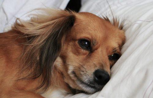 Pas je uginuo samo dva dana nakon puštanja iz karantina, a razlog je mnogo tužniji od koronavirusa!