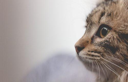 Ako ne želite da naljutite vašu macu, nemojte joj dati da pomiriše ovo