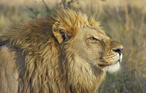 Bizarno! Nosio lava preko albanskih planina da bi mu zabavljao goste u restoranu