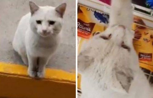 Šta mačak poželi - mačak i dobije: Odveo je prolaznicu u prodavnicu i pogledajte kako je PROFITIRAO (VIDEO)