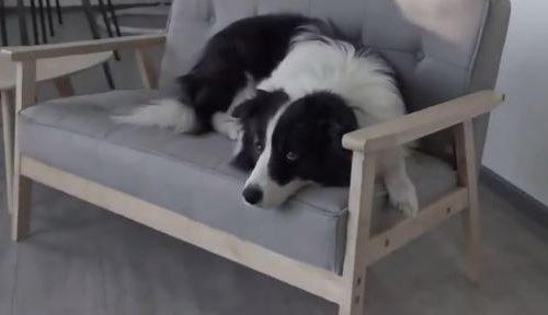 ODGOVORAN LJUBIMAC: Pogledajte bez čega ovaj pas ne želi da izađe napolje (VIDEO)