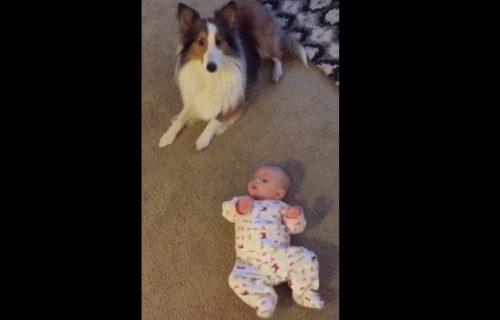 ISTOPIĆETE SE OD DIVNOĆE: Pas slučajno naučio bebu kako da se prevrne (VIDEO)