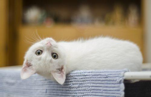 KORISNI SAVETI: Evo kako da vaša mačka ostane srećna u zatvorenom prostoru