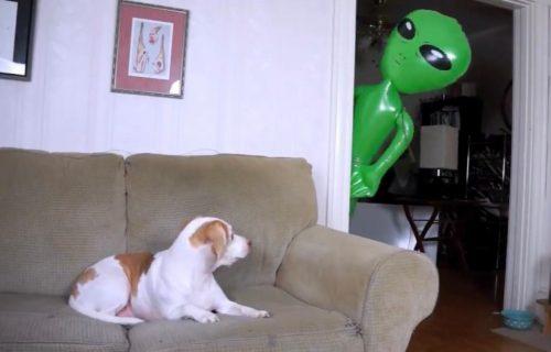 Hteo je da UPLAŠI psa balonom čudnog oblika: Reakcija koja je usledila će vas ODUŠEVITI (VIDEO)