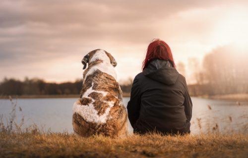 Pas je čovekov najbolji prijatelj, a ovih 10 rasa su ubedljivo NAJODANIJE