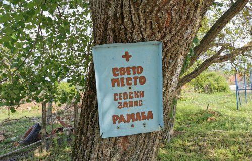 Ako posečete ovo drvo čeka vas BOŽIJA KAZNA, evo zašto ga Srbi smatraju svetinjom (FOTO)