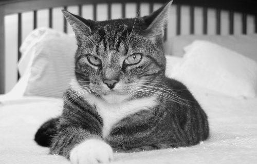 Izbacite mačku iz kreveta! Ne šalimo se: Sa ovim životinjama nikako ne bi trebalo da delite krevet
