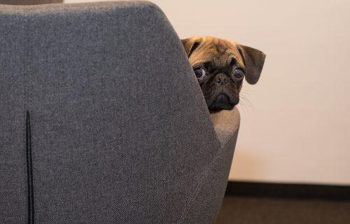 Da li ste primetili: Psi rastu mnogo brže nego što nam se čini (FOTO)