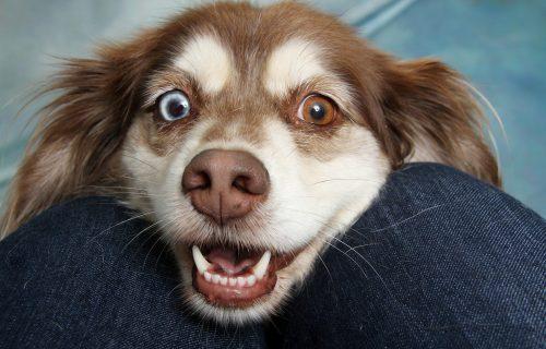 Brinite o svom LJUBIMCU: 6 načina da vaš pas OSTANE ZDRAV