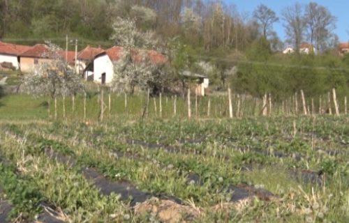 Država pomaže poljoprivrednicima, najveću štetu pretrpeli povrtari (VIDEO)