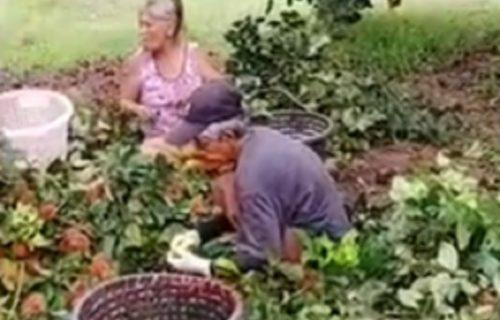 Unuka lažnom pucnjavom PRESTRAVILA babe u dvorištu (VIDEO)