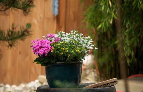 Isprobajte trik sa PELENOM koji će omogućiti vašim biljkama da BRŽE RASTU i nikada ne UVENU (VIDEO)