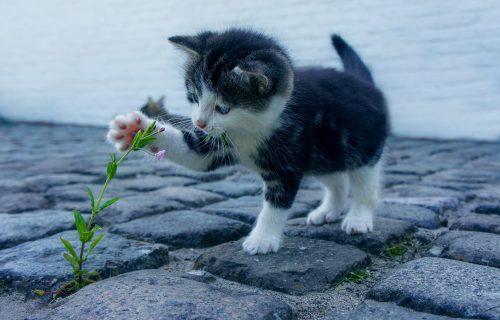 Mačke iz visokog društva: Ovi presmešni mali vragolani osvojiće vaša srca (FOTO)