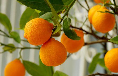 Pomorandže NISU PRVE na listi: 4 vrste VOĆA ima VIŠE VITAMINA C od njih!