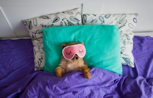 Položaj u kojem spava vaš pas, otkriva SVE o vašem ljubimcu! (FOTO)