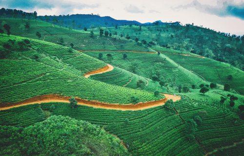 Zemlja čaja, vodopada i kriketa: 10 najzanimljivijih činjenica o Šri Lanki (VIDEO)