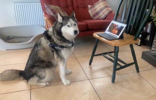 I ljubimcima teško pada izolacija: Psu je toliko nedostajao NAJBOLJI PRIJATELJ, da su morali da obave VIDEO POZIV! (VIDEO)