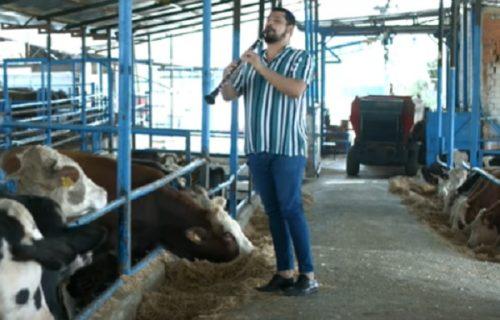 Tope se od sreće: Klarinetista svakog dana održava koncert za KRAVE (VIDEO)