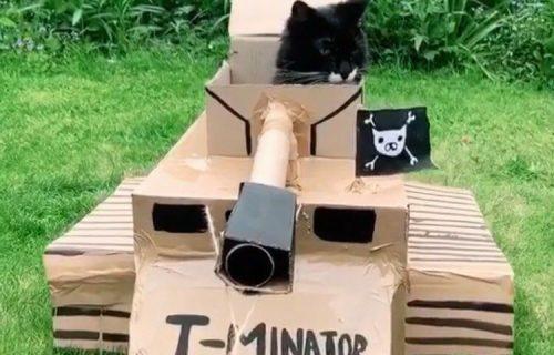 Mačke u KARTONSKIM TENKOVIMA su nova Instagram SENZACIJA (FOTO)