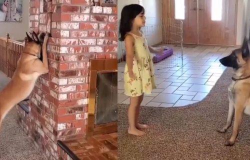 Ljubimac za poželeti: Pogledajte kako ovaj PREPAMETAN pas IGRA ŽMURKE (VIDEO)