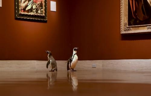 Pingvini posetili muzej u Kanzasu: Dela Karavađa su im se više svidela od Moneovih (VIDEO)