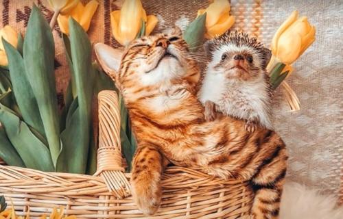 Ovo PRIJATELJSTVO vratiće vam osmeh na lice: Maca i dva ježića, najslađi su svetski putnici! (FOTO)