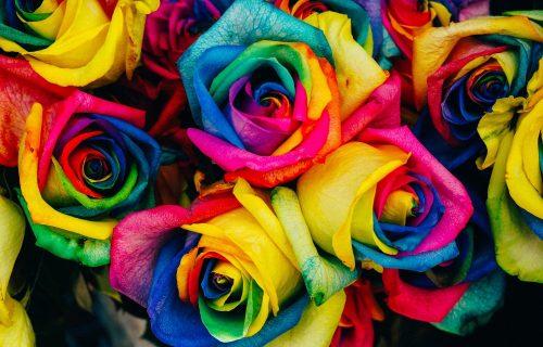 Ruže u duginim bojama su HIT u svetu, a za jednu ćete morati da izdvojite ovoliko NOVCA