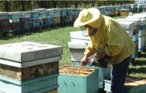 Ogroman gubitak za PČELARE: Požari uništili šume, čak 30 godina će biti potrebno za OPORAVAK