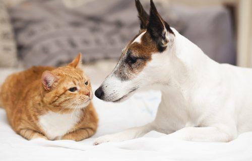 Konačno objašnjeno: Zašto psi ZAISTA jure mačke?