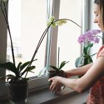 Ove biljke ne smete da držite u kući: Mogu da budu loše po ZDRAVLJE i donose NEGATIVNU energiju