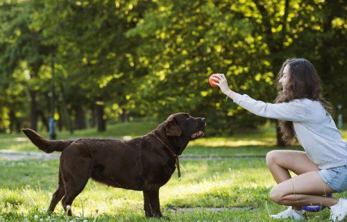 ZADIRKUJETE psa tokom igre? Pravite veliku GREŠKU!