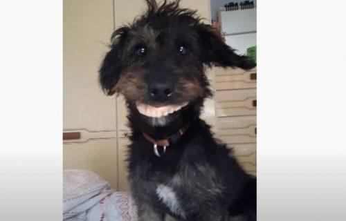 Plakanje od smeha: Nestašni mešanac ukrao zubnu protezu i postao internet zvezda (VIDEO)