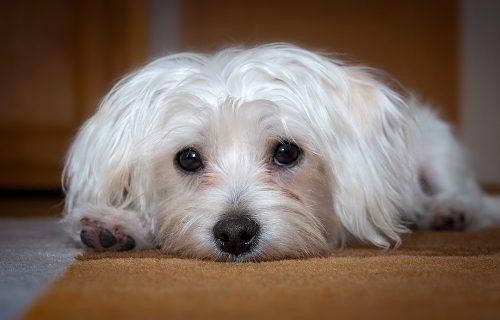Posle 14 godina, ostavili su svog psa u skloništu za nezbrinute životinje! Razlog će vas RASPLAKATI!