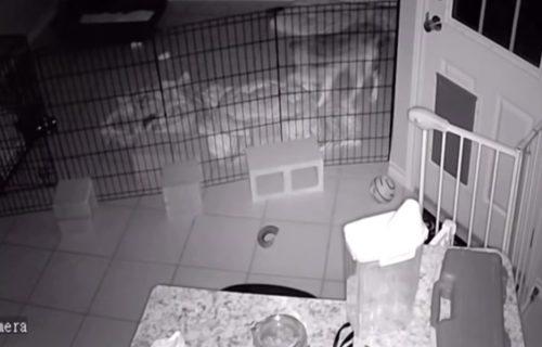 Vlasnik ostao bez teksta nakon što je video šta je toliko uznemirilo njegovo štene (VIDEO)