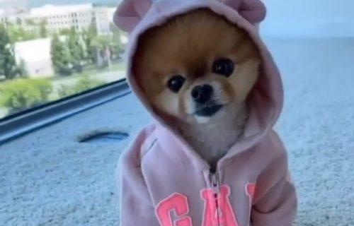 Ovo je 7 najpopularnijih pasa na Instagramu, a jedan od njih se pojavio i u spotu Kejti Peri (FOTO+VIDEO)