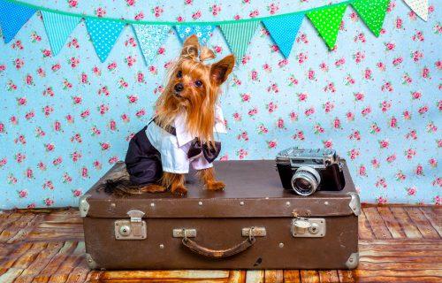 Planirate odmor sa kućnim ljubimcem? Ovo morate da znate pre nego što krenete na put!