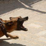 Horor u Sjenici: Pas napao i IZUJEDAO devojčicu (8), hitno prevezena u bolnicu
