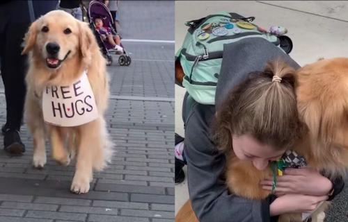 I vama će ulepšati dan: Pogledajte psa koji OBOŽAVA da se GRLI sa ljudima i da ih usrećuje (VIDEO)
