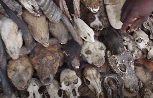 Isušene glave majmuna, kuvana koža, vučje kosti: Dobrodošli na najveću svetsku pijacu vudu magije (VIDEO)