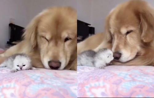 Pospani krzeneni prijatelji: Snimak dremke mačeta i psa koji će RAZNEŽITI svakoga (VIDEO)