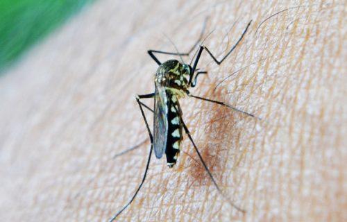 Građani, PAŽNJA! Javite se lekaru ako imate simptome, kod komarca u Beogradu potvrđen VIRUS Zapadnog Nila