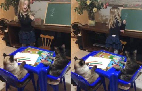 Mačja škola: Dve mačke NEPOMIČNO slušaju predavanje jedne devojčice (VIDEO)