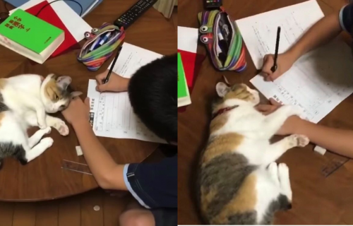 """Njoj definitivno treba VIŠE PAŽNJE: Pogledajte mačku koja """"pomaže"""" dečaku da uradi domaći (VIDEO)"""