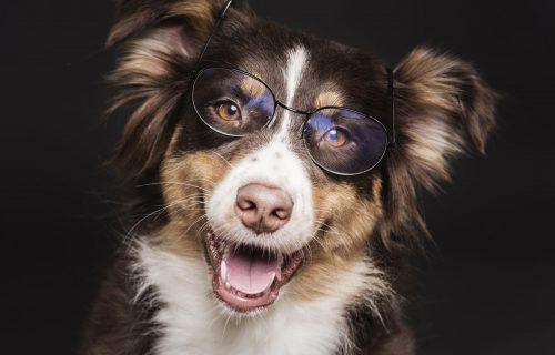 Kad je pas u PENZIJI: Evo kako brinuti o starijem LJUBIMCU!