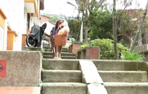 Da sve bude LAKŠE! Osmogodišnji pas Eros, DOSTAVLJA namirnice svojim komšijama (VIDEO)